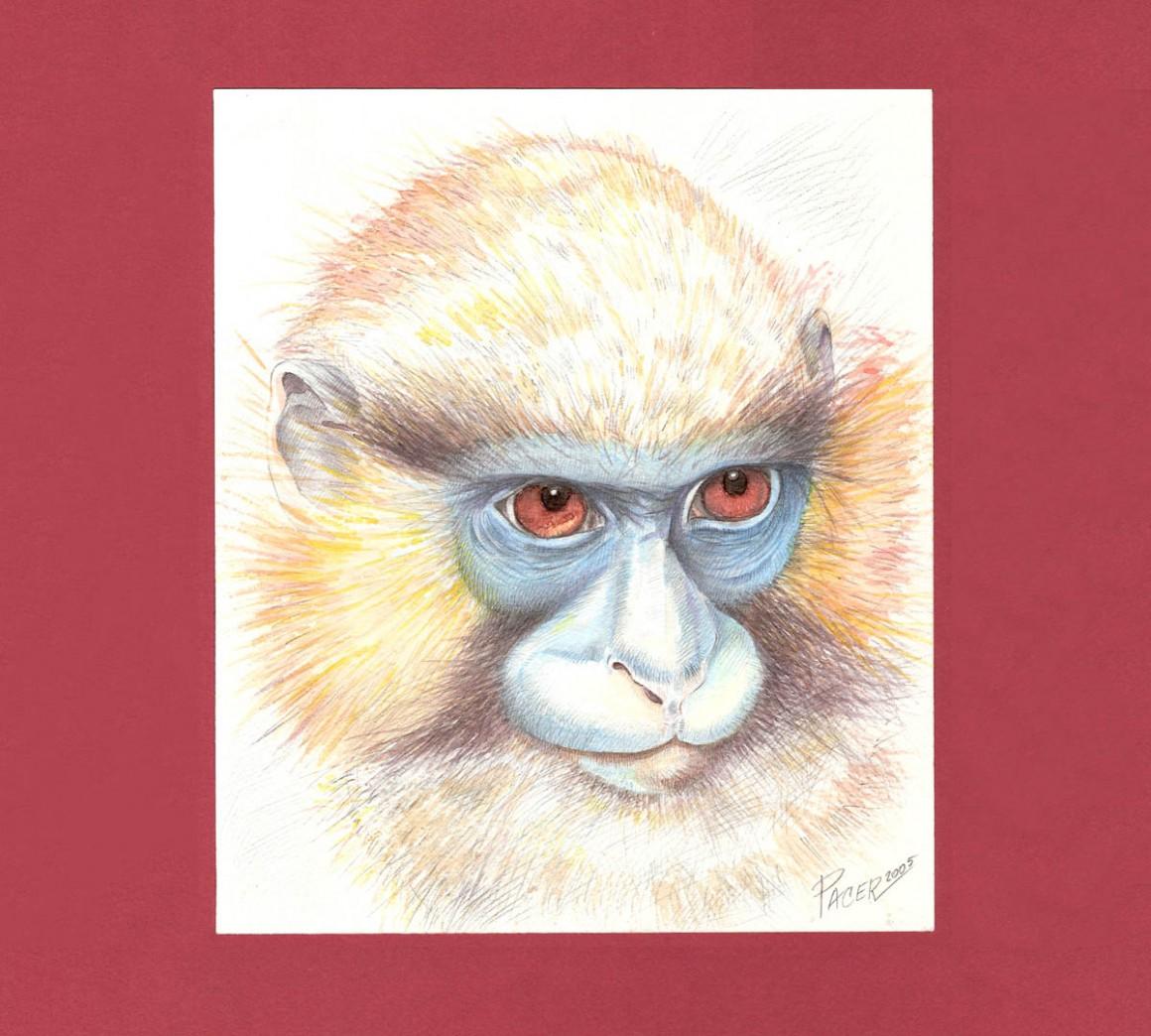 Illustrazione8_Scimmia